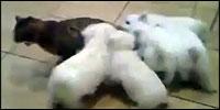 gato-perros