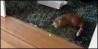 gato-laser