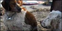 perro-tsunami
