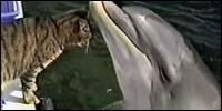 gato-delfines