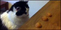 gato-trilero