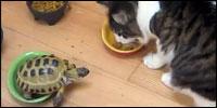 tortuga-gatos