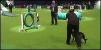 competicion-perros